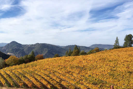 Candlestick Ridge Vineyard - Vineyard 36